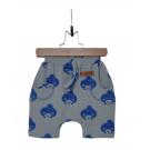 Short blue hedgehog