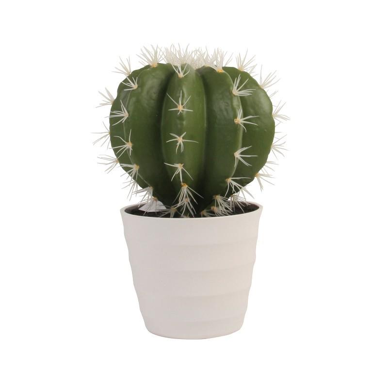 Cactus Coalzacoalcos