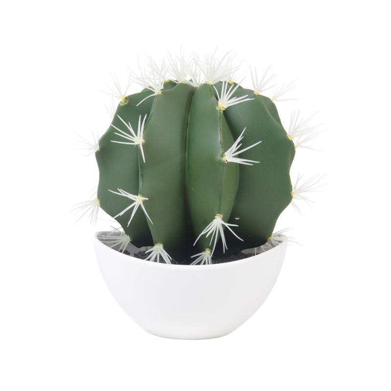 Cactus Phoenix