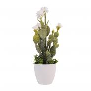 Cactus Chihuahua